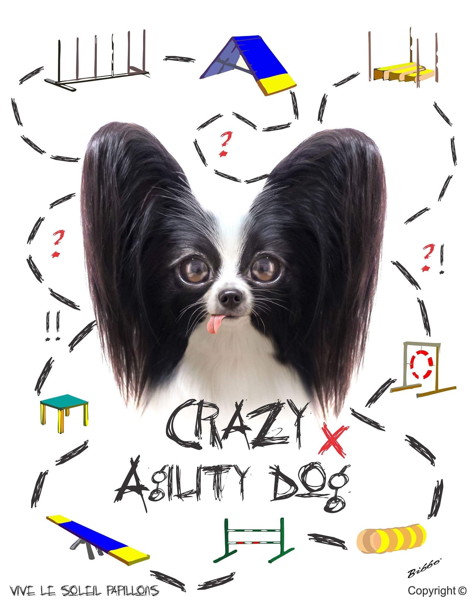 Vive Le Soleil: Crazy Agility Dog